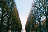 pruned trees line a path leading to a mansion