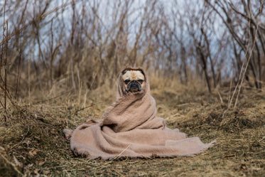 pug in a blanket on dry path