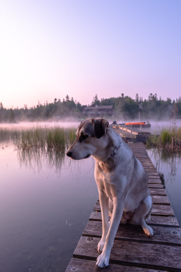 pup on a dock