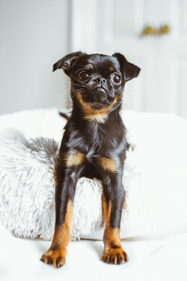 puppy on fluffy bed