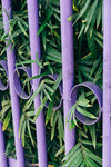 purple fence with lush green leaves