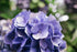 High Res Purple Flower Petals Close Up Picture — Free Images