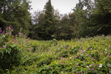 quiet wild meadow filled with plants