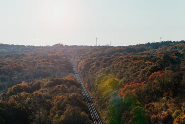 railway tracks stretch through fall trees