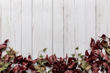 red and green leaves with wood background