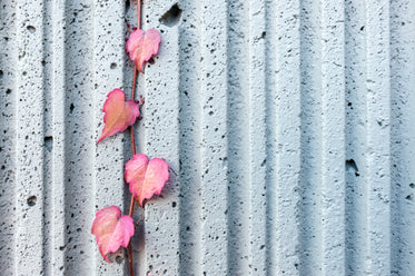 red ivy on concrete