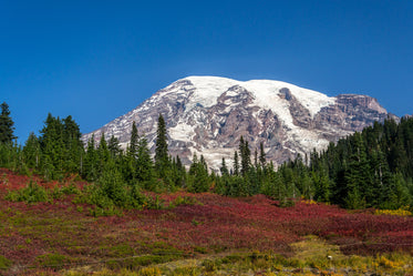 red meadow and snow capped mountains