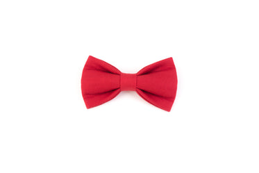 Picture of Red Pet Bowtie - Free Stock Photo