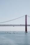 red suspension bridge over waterway filled with sailboats