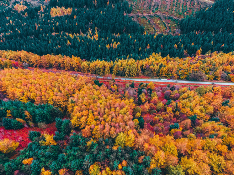 Road Winding Through Colourful Trees