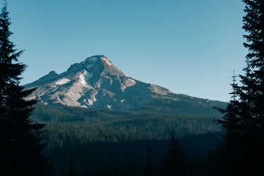 rocky mountain above evergreen forest