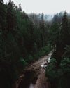 rocky river in dense forest