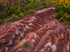 Browse Free HD Images of Sandy Hills With Natural Reds Landscape