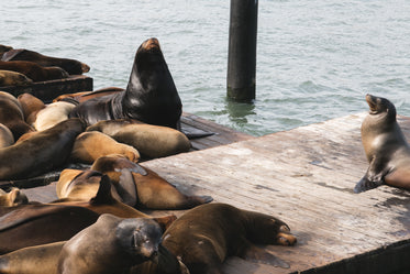 Free Sea Lions On Dock Photo — High Res Pictures