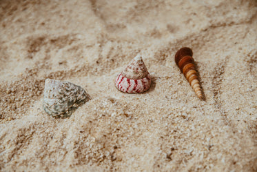 seashells by the seashore