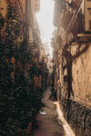 sepia alley with ivy on the walls