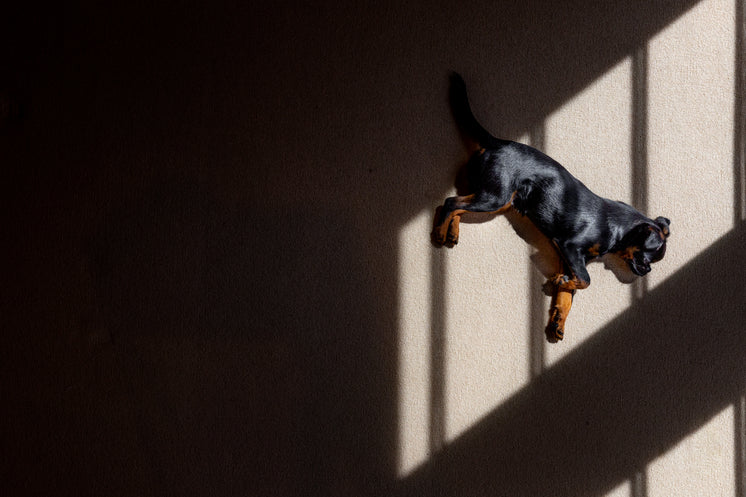 Shadows Cast Over Brussels Griffon Puppy