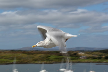 sharp yellow seagull eyes in a blur of feather flutter