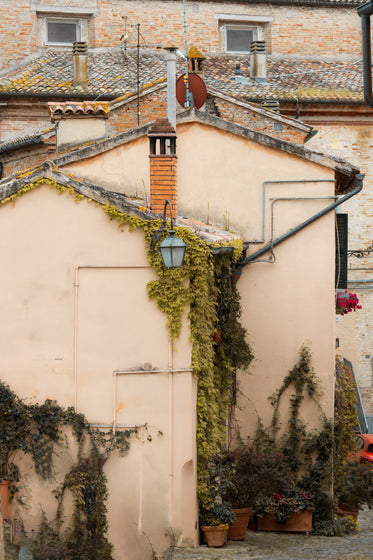 side of a buildings with vines growing over the side