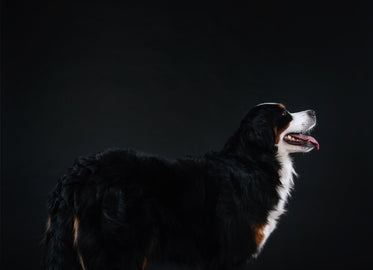 side profile of young dog looking forward