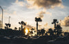 silhouetted palm trees in front of sunset