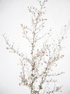 slender bronze twigs against a frosty white background