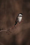 small bird sits on a bare tree branch