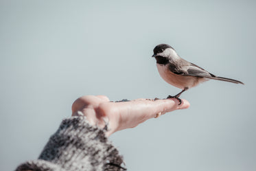 small bird stands in a persons hand