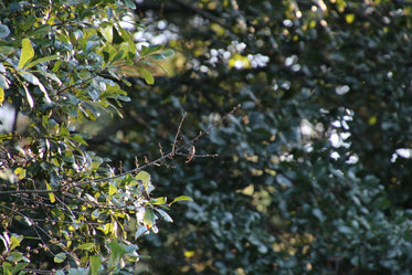 small brown bird on a branch