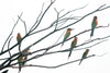 Small Colored Birds Perched On Bare Tree Branches