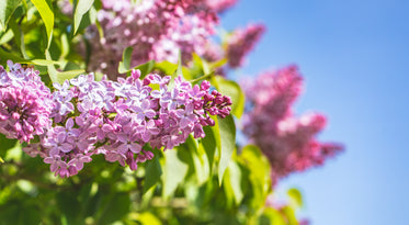 small pink flowers on a tree branch