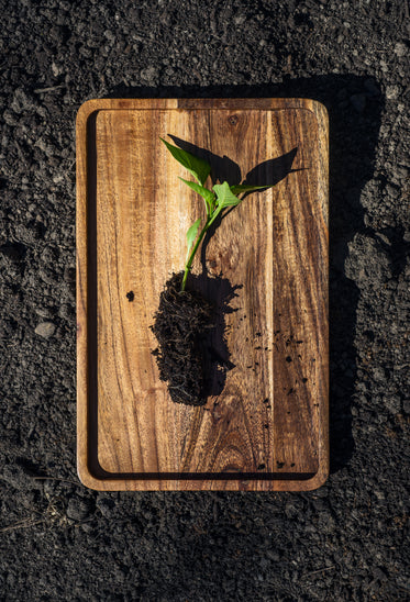small plant on a wooden board ready to plant