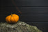 small pumpkin on rock