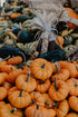 Browse Free HD Images of Small Pumpkins And Colorful Corn