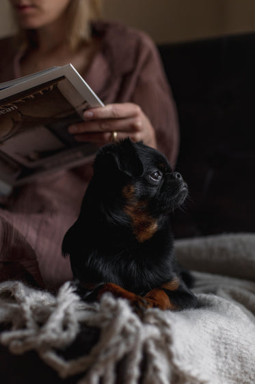 small puppy sits next to a person reading a book