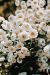 small white flowers in a bunch
