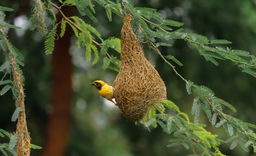 small yellow bird on a tangled nest in a green tree