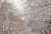 snow covered branches in winter