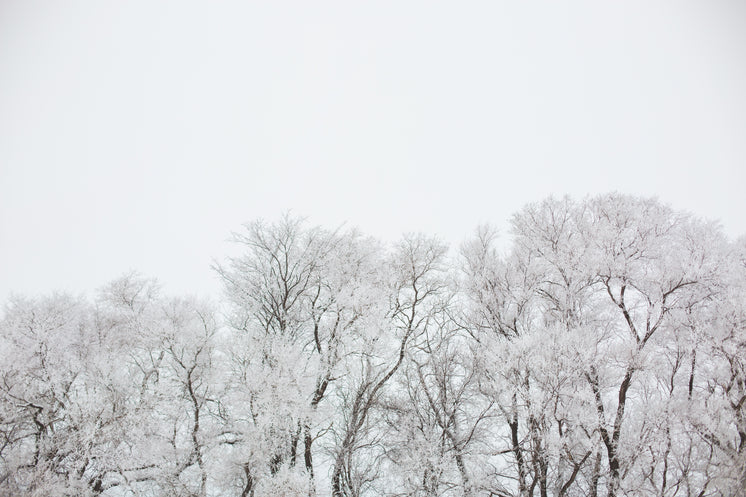 Snow Covered Giants Of Nature