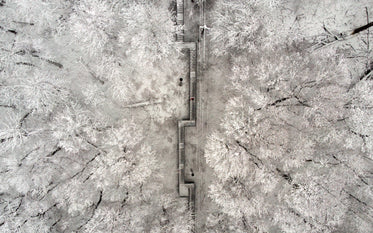 snow-covered stairs cut shapes through snow-capped trees