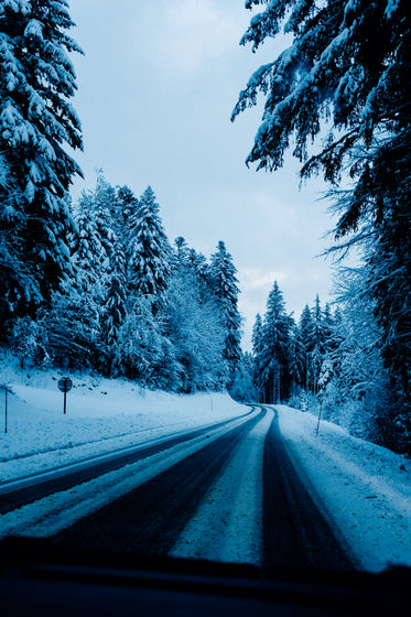 snow covered trees line a snowy road