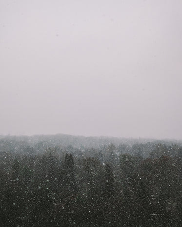 snow fall over tree tops