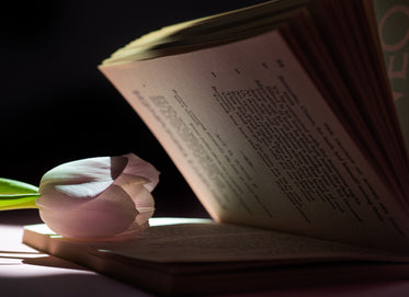 soft petals of a tulip rest on a books pages
