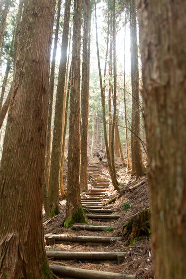 some logs create wooden steps between tall trees