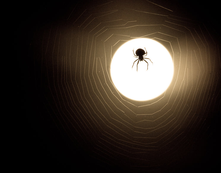 spider-and-web-moonlight-silhouette.jpg?