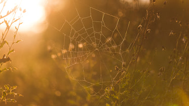 Picture of Spider Web — Free Stock Photo