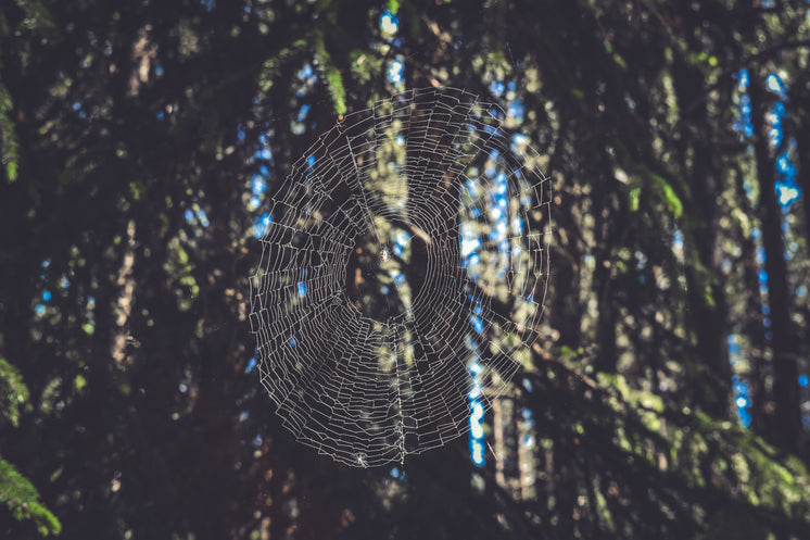 Spiders Web In Forest Light