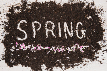 spring in dirt with flower pedals
