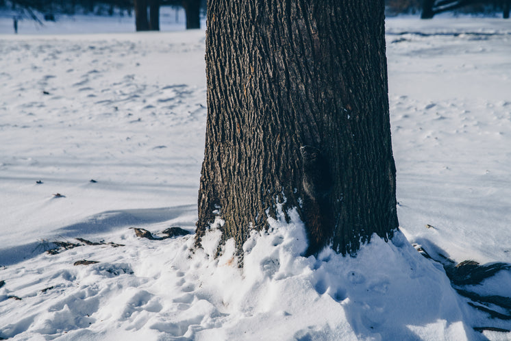 squirrel-climbing-tree-trunk-in-snow.jpg
