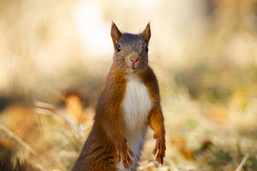 squirrel poses for a close up